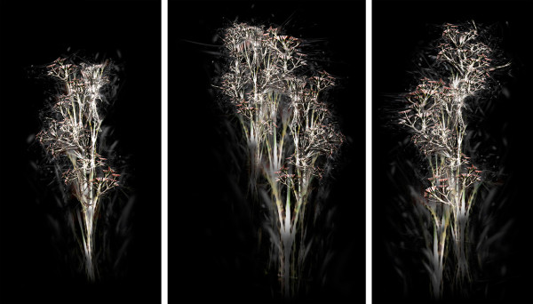 Rohini Devasher Untitled I, II & III from the Bone Tree series Archival pigment print on Hahnemühle Fine Art Baryta paper Size: (left to right) 34 x 66 inches, 45 x 66 inches, 34 x 66 inches 2014