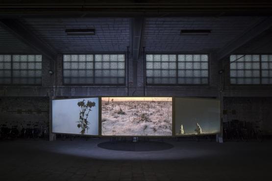 Pallavi Paul, Contour Biennale, 2017