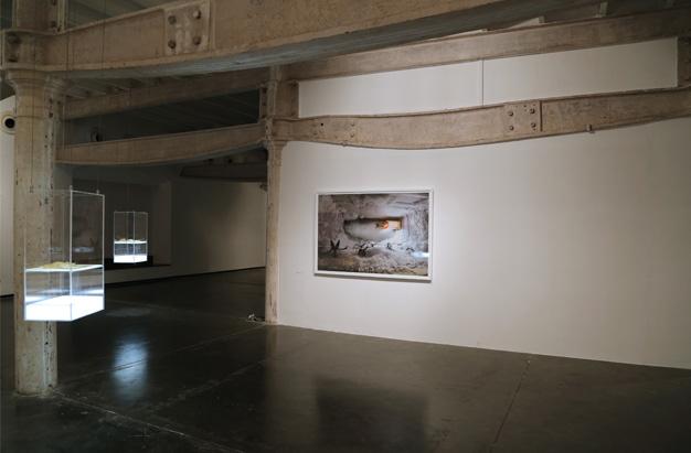 "Prajakta Potnis, ""When the wind blows..."" , Installation view"