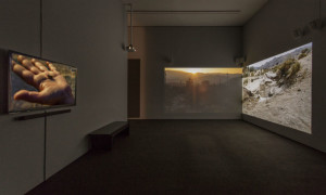 "Installation view of Neha Choksi in ""Made in L.A."" at the Hammer Museum, Los Angeles. Photo: Brian Forrest."